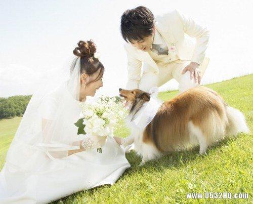 拍宠物婚纱照有哪些注意事项