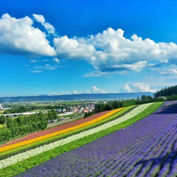 日本北海道之夏